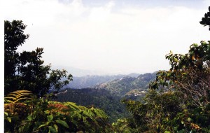 Jamaica's Blue Mountians, A Natural Wonder