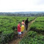 Expert Calls for Irrigation to Increase Tea Production in Tanzania