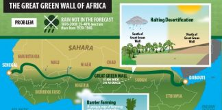 Imagining The Great Green Wall Of Africa