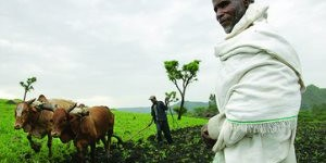 Cameroon Land Grab