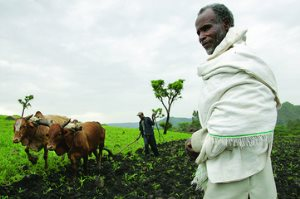 The Advantages Of Large-Scale Commercial Farming In Africa