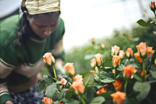 Flower Growers Planting Seeds of Profit in Ethiopia