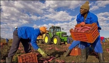 Agribusiness Set To Boom Across Africa