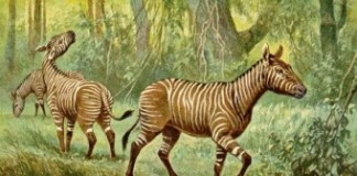 Horse Fossils Found In Ethiopia Date Back 4.4 Million Years
