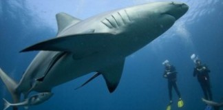 Shark Diving South Africa (2)