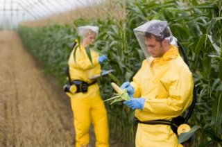 European Scientists Descend On Africa To Promote Genetically Modified Crops