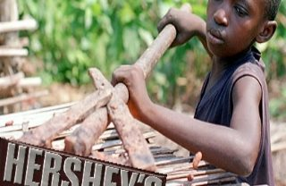Hershey Investor Sues For Cocoa Records On Africa Farms That Use Child Labor