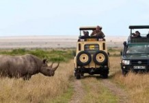 Top 10 Affordable Safaris In East Africa