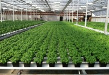 Meet The Company That Can Start Growing Marijuana Across The US On 48 Hours Notice