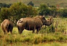 South Africa's National Parks Draw More Visitors