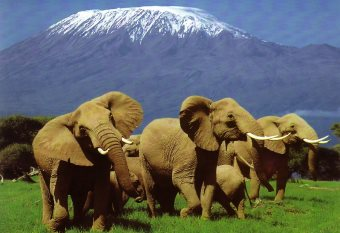 10 Top Tourist Attractions In Kenya