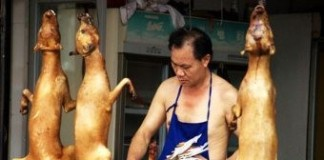 Canine Controversy: Chinese Festival Serves Up Dog Meat