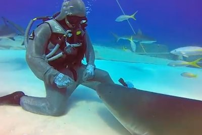 What This Diver Does To A Shark In The Bahamas Will Blow Your Mind (VIDEO)