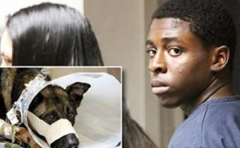Florida Teen Sentenced To 23 Years For Killing A Dog!