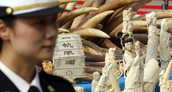 Chinese Involved In All Of Africa's Ivory Smuggling: Report