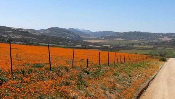 The Desert In Africa That Is Covered In Flowers