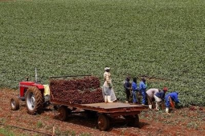 New African Farmers Take Root In South Africa's Old Tribal Areas