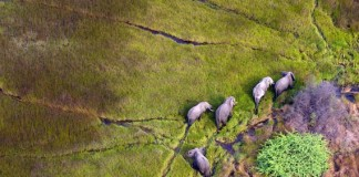 11 Of The Most Stunning Aerial Safaris In Africa