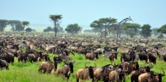 Tanzania's Serengeti Voted World's Best Safari