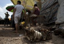 10,000 Dogs On The Menu At China's Yulin Festival