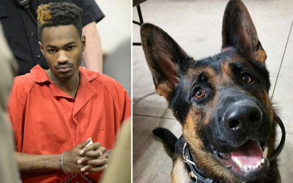 Man Sentenced To 45 Years In Prison For Allegedly Killing Police Dog