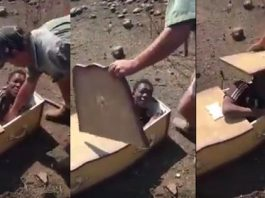 DISTURBING: Video Surfaces Showing White Settlers Forcing African Man Into Coffin