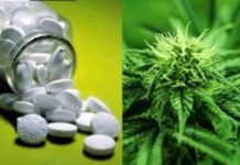 Jamaican Scientists On The Verge Of Creating Affordable Hepatitis C Drug From Marijuana