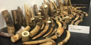 Chinese 'Ivory Queen' Convicted Of Smuggling In Tanzania