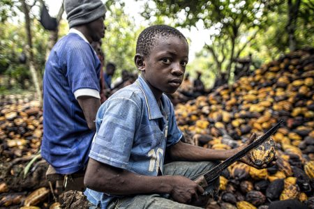Ghana And Ivory Coast Suspend Cocoa Exports Demand Fair Price